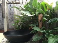 Balinese bathroom More