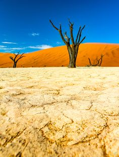 """https://flic.kr/p/Q4tc53   Deadvlei   Last year when I was in Deadvlei, we had some cloud cover, which made climbing Big Daddy much easier, but it also made Deadvlei look a lot different than the """"typical"""" pictures I had seen from there.  Big blue skies, contrasty red sand with white salt ground, they didn't have the same pop/effect when the sky was covered in clouds. So it was fitting that this year, although climbing Big Daddy seemed more rigorous, the conditions for Deadvlei wer..."""