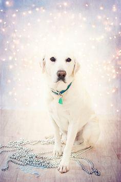 (8) Bokeh doggie | *:✧・ Bokeh Thematics ・✧・:* | Pinterest