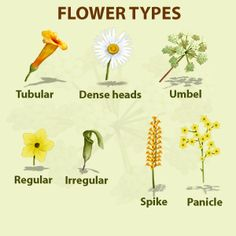 general information Flowers Plant Science, Science And Nature, Botanical Science, Leaf Identification, Forest School Activities, Biology Lessons, Nature Plants, Nature Journal, Types Of Flowers