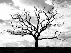 love trees...