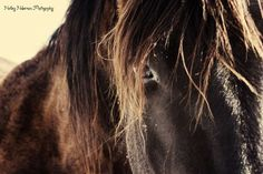 a horse named 56.....#horse, #western, #country