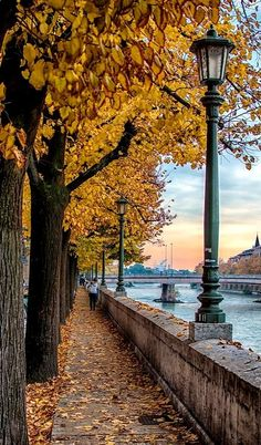 Autumn.. Lungadige - Verona, Italy   by Fabrizio Iacoviello on 500px