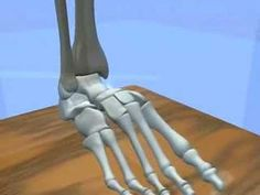 Ankle & Subtalar Joint Motion Function Explained Biomechanic of the Foot...