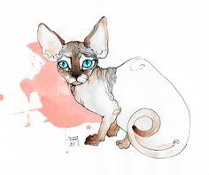 Sphynx cat illustration by Sara Ligari