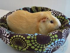 Make a quick and easy Guinea Pig bed with NicoleMarie's tutorial.
