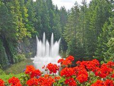 Ross Fountain and geraniums, Butchart Gardens, B. (British Columbia) by Martin LaBar (going on hiatus)