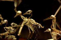 Bird skeletons