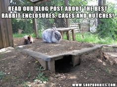 Kaninchen Info - Aussengehegebau - Villa Hasi - - Latoya Higgins Page Rabbit Shed, Rabbit Farm, Rabbit Burrow, House Rabbit, Bunny Rabbit, Rabbit Cages Outdoor, Outdoor Rabbit Hutch, Meat Rabbits, Raising Rabbits