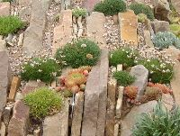 alpine garden  rockery stone this would look beautiful in place of lawn b/tn street and sidewalk.
