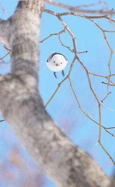 シマエナガ Cute Birds, Small Birds, Little Birds, Animals And Pets, Baby Animals, Funny Animals, Cute Animals, Beautiful Birds, Animals Beautiful