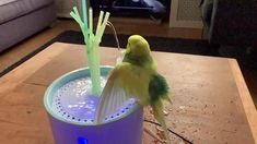 How to Bathe Your Bird 11 Ways! 3 good reasons for a parrot wash In birds, there are two ways to wash: in quick mode by replacing the feathers with the beak or by taking a good bath/shower. Funny Birds, Cute Birds, Pretty Birds, Baby Animals Super Cute, Cute Funny Animals, Parakeet Care, Pet Bird Cage, Parrot Pet, Parrot Toys