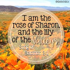 Song of Solomon 2:1