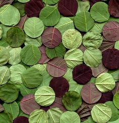 horticultural art