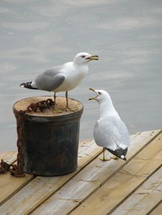...It's true there is a sign up on the quaywide...NO FEEDING THE BIRDS!!!!
