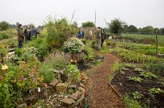 The Lost Plot - Chorltons Original Community Allotment Project: Manchester Permaculture Network - Autumn Equinox Event