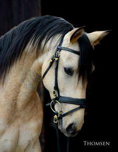 Beautiful horse!!! Jaw-Dropping !!