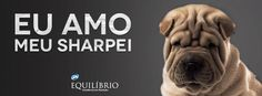 Impossível é não pensar em apertar essa fofura quando você vê um por perto #Sharpei #Cachorro #Eu_Amo_Todas_as_raças