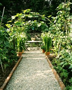 Garden: A gravel pathway leading to a table and chairs in a garden.