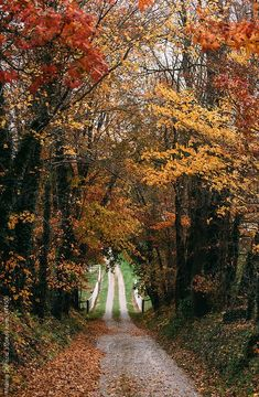 Fall by Melanie DeFazio - Stocksy United Beautiful Roads, Beautiful Landscapes, Beautiful Places, Landscape Photography, Nature Photography, Photography Ideas, Back Road, Nature Pictures, Autumn Pictures