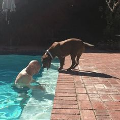The continuing adventures of Sir Patrick Stewart and his new rescue pit-bull, Ginger. : gifs