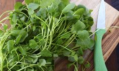 Heath Benefits and Nutrition Facts of Watercress Natural Spring Water, Seeds For Sale, Herb Seeds, Growing Seeds, Organic Herbs, New Flavour, Diet And Nutrition, Superfood, Turmeric