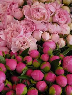 if i had my way, peonies would be in season all year long, and they would be EVERYWHERE