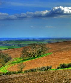 Dorset Scenery, Dorset, England