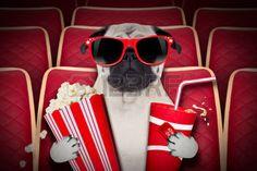 palomitas de maiz: ver una película en una sala de cine de perro, con refrescos y palomitas de maíz usando anteojos Foto de archivo