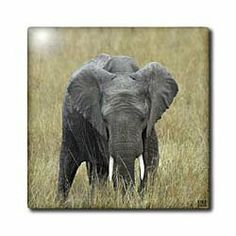 """African elephant, Loxodonta africana, Masai Mara National Park Kenya Africa - 12 Inch Ceramic Tile by Kike Calvo. $22.99. Clean with mild detergent. Construction grade. Floor installation not recommended.. High gloss finish. Image applied to the top surface. Dimensions: 12"""" H x 12"""" W x 1/4"""" D. African elephant, Loxodonta africana, Masai Mara National Park Kenya Africa Tile is commercial quality. Construction grade, glossy finish tiles are produced from material clays and mine..."""