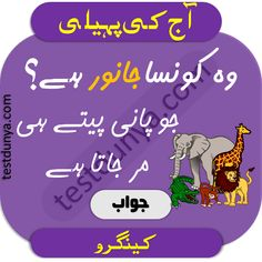Riddles in Urdu for Kids with Answers 2020 Tough Riddles, Funny Puzzles, Chai Quotes, Love Life Quotes, Funny Jokes, Humor, Reading, Places, Creative