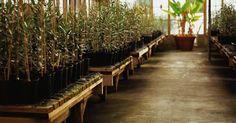 Crear tu propia mezcla de nutrientes hidropónicos es una manera rentable de asegurar la salud de tus plantas hidropónicas. También te da más control sobre el pH de la solución ...