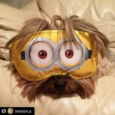 #RepostTelecine  Descobriram uma nova raça de cachorro... Qual será o nome dela? Nos disseram que eles adoram uma banana!  #Minion #Minions by redetelecine