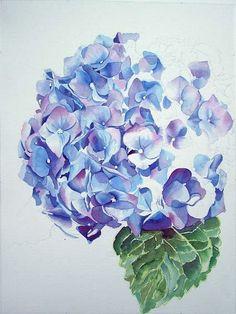 blue hydrangea water colour