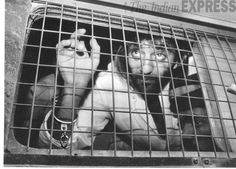 File Photo: Actor Sanjay Dutt is taken to prison from a hearing of the Bombay blast TADA case against him in 1993.