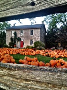 Strom's Farm in Guelph, Ontario, Canada. Awesome farm with lots to do...pumpkin chuckin', corn maze, hayrides...and a yummy bakery!