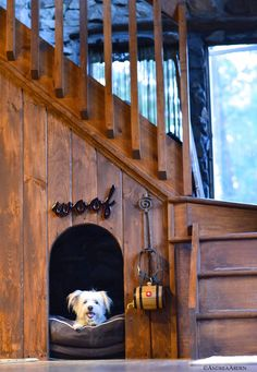 This lovely below the stairs resting spot was made for Nora's friend, Jack, and she borrowed it for a test drive.#dogs #mixedbreeds #noraarden #andreaarden #NYC #newyork
