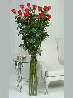 5 Foot Breathtaking Beauty Roses foot tall roses from