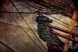 Image detail for -Bounty Pirate Ship FIgurehead - Free online photo gallery at ...