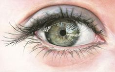 → Advertise on Illusion          Eyes and Freckles      The color pencil drawings of Amy Robins.              Artwork © Amy Robins    Link via Life is a Danceable Tragedy  POSTED BY ADRIANA DE BARROS   Published on NOV 02, 2012 in Categories: Art Best of 2012 Drawing & Sketching Hyperrealist  28    Read More...         News from the Web            108      28