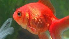 260 Best Fish Aquariums Images Fish Tanks Fish Aquariums