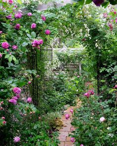 I love the roses and also the other plants dripping onto the walkway.