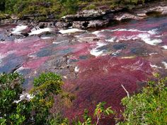 Considered by many to be the most beautiful river in the world, Caño Cristales is one of the most remote destinations in Colombia Most Beautiful, Beautiful Pictures, Grand Canyon, Remote, World, Rivers, Water, Beaches, Travel