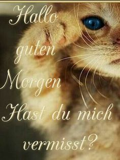 I missed you. Good Morning Sunshine, I Missed, I Miss You, Best Quotes, Awesome Quotes, Good Night, Animals And Pets, Cute Cats, Happy Day