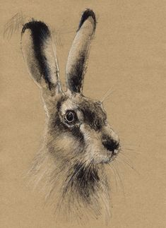 Brown hare brown paper, Artist Sean Briggs producing a sketch a day, prints available at https://www.etsy.com/uk/shop/SketchyLife #art #drawing #hare #http://etsy.me/1rARc0J