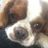 En Kolay Cocostar (10 Dakikada) - Nefis Yemek Tarifleri Doritos, Dogs, Animals, Candy, Animales, Animaux, Pet Dogs, Doggies, Animal