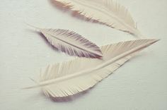 fold paper in half and then lightly up to create the 'stem' of the feather: then just cut very finely