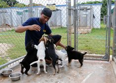 8 Fun Ways You Can Help Your Local Animal Shelter