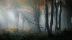 Trademark Global Veselin Atanasov Bulgarian Panorama Canvas Art - 37 x 49 Nature Landscape, Forest Landscape, Outdoor School, Outdoor Camping, Artist Canvas, Canvas Art, Yellow Leaves, Dark Forest, Magic Forest