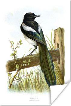 45 Best Yunus Images In 2020 Pet Birds Bird Beautiful Birds